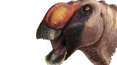 """""""Schaufelförmige Adlernase"""": Paläontologen identifizieren neue Dinosaurierart"""