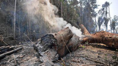 Soldaten bekämpfen Flammen im brasilianischen Regenwald – Suche nach Brandstiftern auf Hochtouren