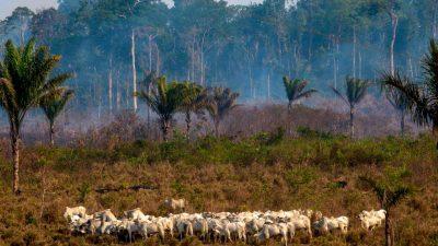 Amazonas-Waldbrände: Wie die Feuer politisch instrumentalisiert werden