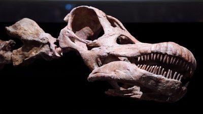 Studie: 2012 entdeckter Titanosaurus stellt alle anderen Saurier in den Schatten
