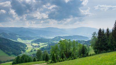Klassik des Tages: Im schönsten Wiesengrunde