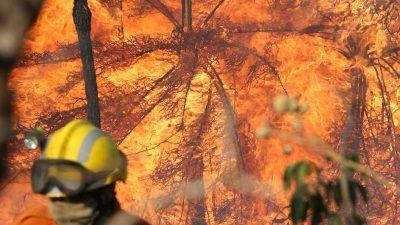 """Verheerende Brände toben im brasilianischen Amazonasgebiet – Einwohner sprechen von """"schwarzem Regen"""""""