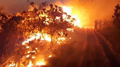 Bolsonaro vermutet Umweltschützer hinter Amazonas-Bränden