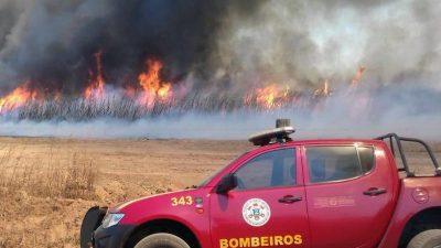 "Bolsonaro: Null-Toleranz-Politik bei Umweltverbrechen – Amazonas-Häuptling will Bolsonaro ""los werden"""