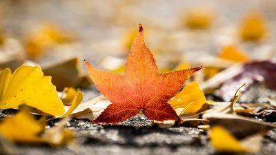 Herbst – Von Rainer Maria Rilke