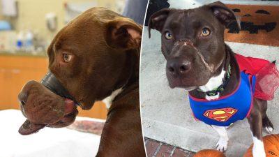 Hund mit zugeklebter Schnauze hat sich vollständig erholt, ist jetzt Maskottchen für Tierschutz