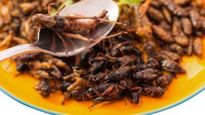 Warum wir alle Insekten essen sollen – in Snacks und Mehl und mehr