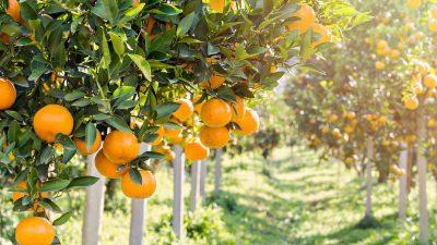 An eine Orange – Von Francisca Stoecklin