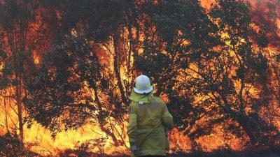 Die Waldbrände in Australien – Desaster durch wechselnde Verordnungswut