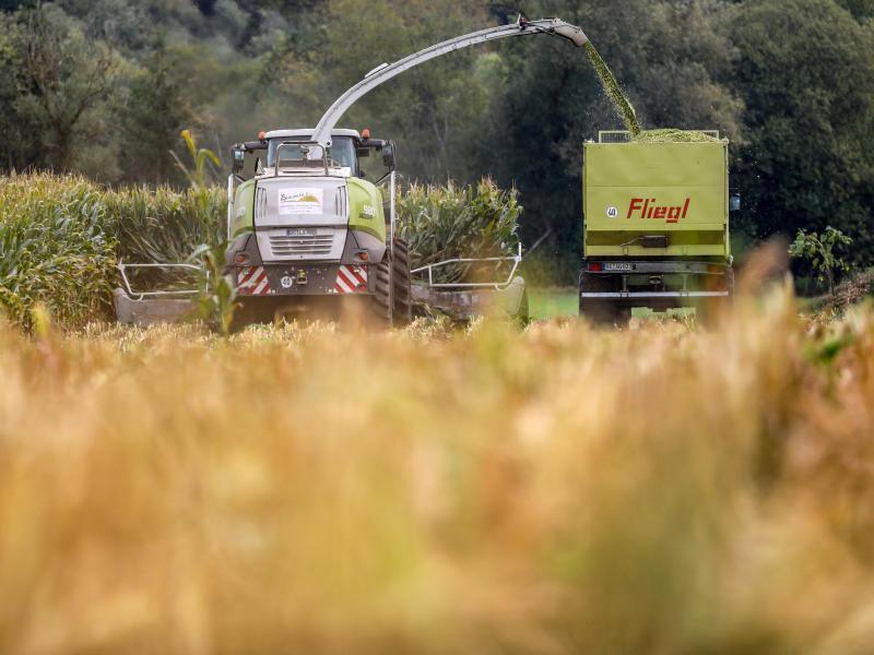 """Deutsche Politik bremst Klimaschutz: """"Agroforste"""" trotz EU-Unterstützung nicht gefördert"""