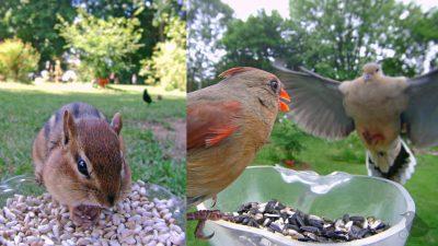 """Spaß-Vögel zu Gast bei """"Ostdrossel"""" – Kamera im Futterhäuschen zeigt süße Gartenbesucher"""