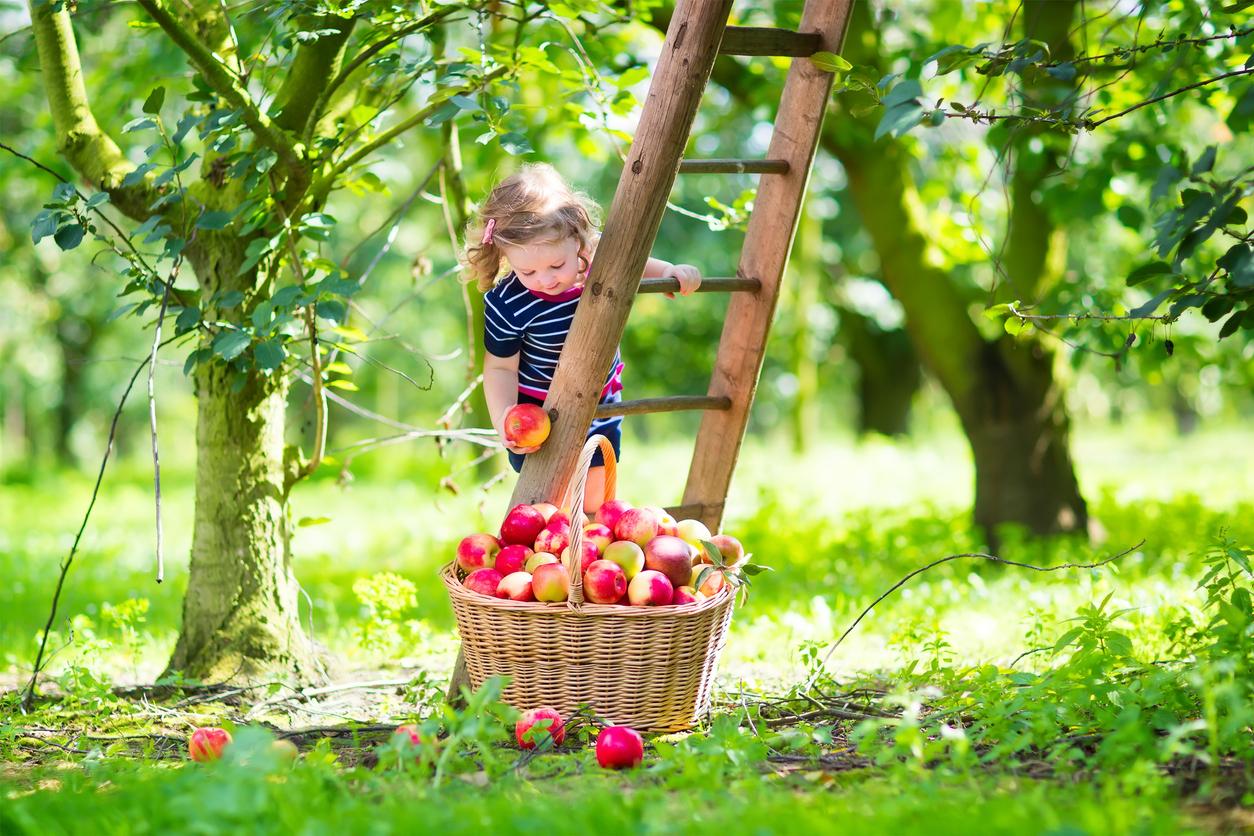 Eine weitere Klima-Lüge zerschlagen: Apfelernte in Wisconsin