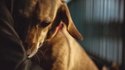 """Hunde weinen herzzerreißende """"Tränen der Traurigkeit"""" nachdem sie verstoßen wurden"""