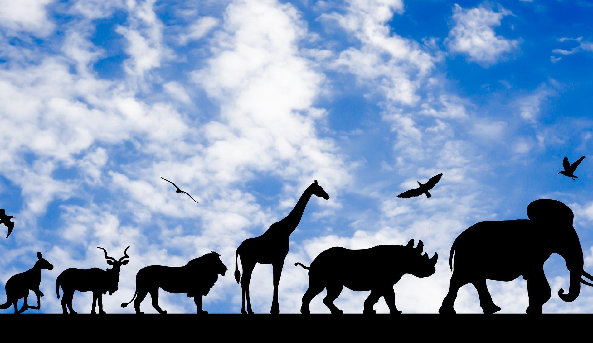 Klassik des Tages:  Der Karneval der Tiere