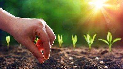 Selbstversorgung aus dem Hausgarten – Was jetzt zu tun ist