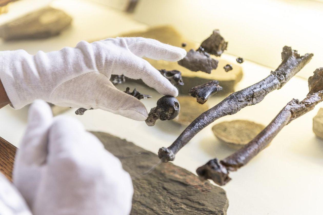 Sensationsfund: Erster aufrecht gehender Mensch könnte aus dem Allgäu stammen