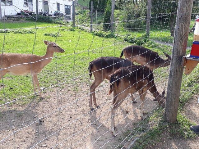 In Werfen wurde ein illegales Araber-Hotel hochgenommen. Hier wurden auch Wildtiere für die Zubereitung von Speisen gehalten.