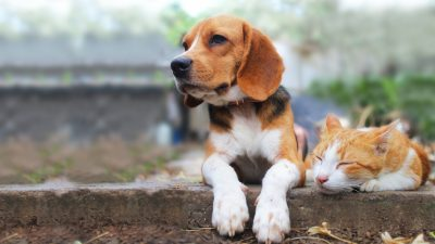 Sonntagsmärchen: Wie Hund und Katze Feinde wurden