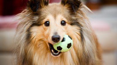 Vom Zoo lernen, heißt spielen lernen: So bleibt Ihr Hund immer geistig fit