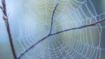 Der Spinne abgeschaut: Klebstoff für feuchte Räume oder im Außenbereich