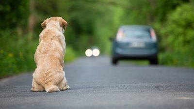 Thailand: Loyaler Hund wartet vier Jahre am Straßenrand, bevor ihn sein Besitzer findet