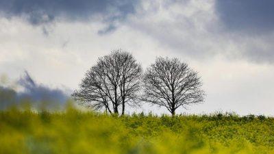 """Klimaschutz-Stratege: """"Freude über weniger Emissionen wegen Corona-Krise ist unangebracht"""""""