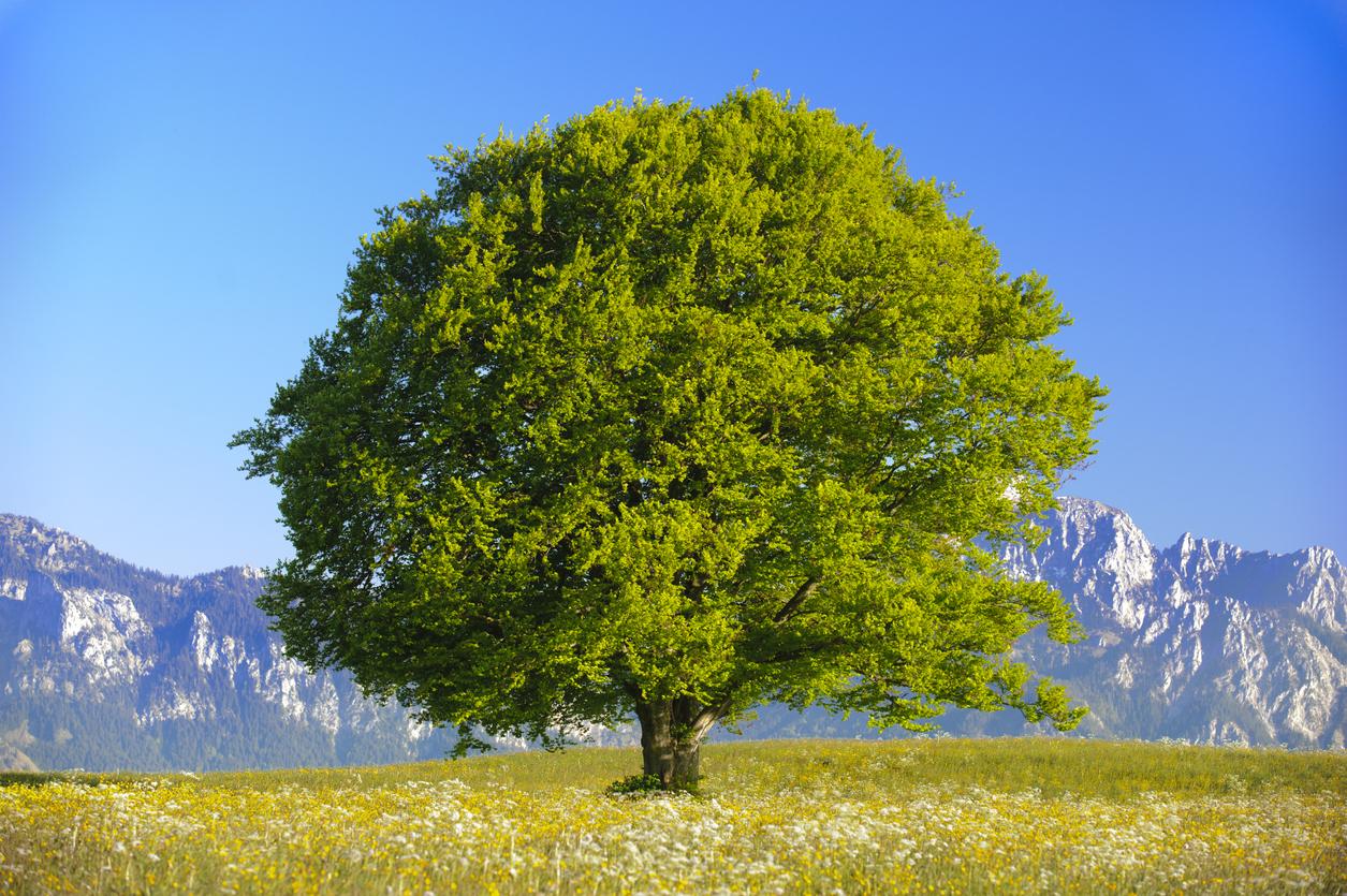 Zu wenig CO2 erzeugte Hungersnöte – Natural Recycling oder: Wie die Natur es macht