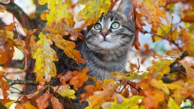 Juristen fordern Ausgehverbot für Katzen