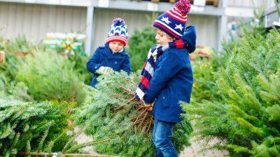 Keine Ökologie bei Weihnachtsbaumkauf – Die Nordmanntanne dominiert
