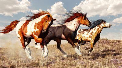 11.000 Hektar für Wildpferde: Cowboy schenkt Hunderten Mustangs ein Leben in Freiheit