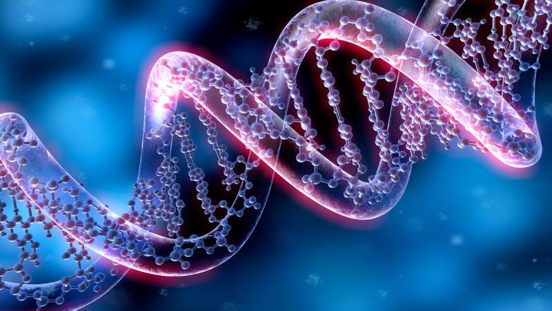 DNA besteht aus zwei Halbsträngen RNA.