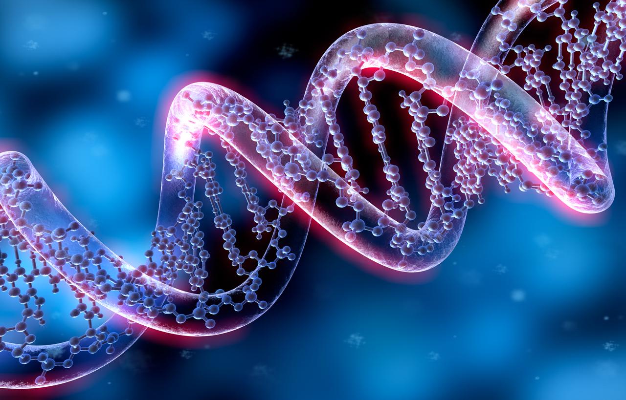 Studie: Menschliche Zellen können RNA-Sequenzen doch in DNA umschreiben