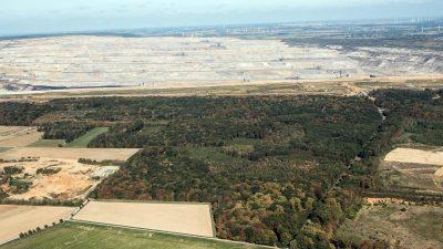 """RWE will Hambacher Forst behalten: """"Um Geld geht es dabei gar nicht"""""""