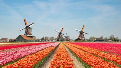 Klassik des Tages: Kammermusik aus den Niederlanden