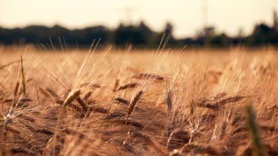 Sonntagsmärchen: Wie der Bauer beten lernte