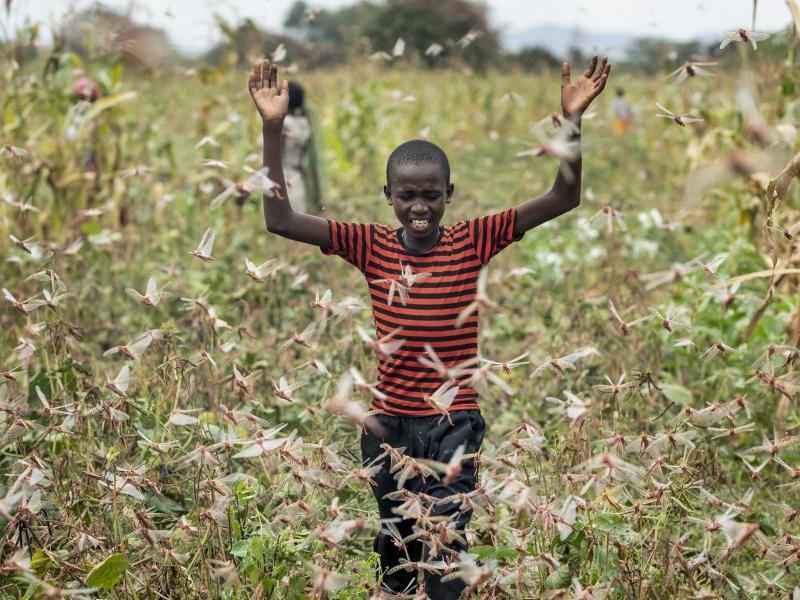 Heuschreckenplage am Horn von Afrika
