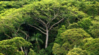 2,7 Millionen Bäume gepflanzt: Ehepaar sorgt in Brasilien für Regenwald