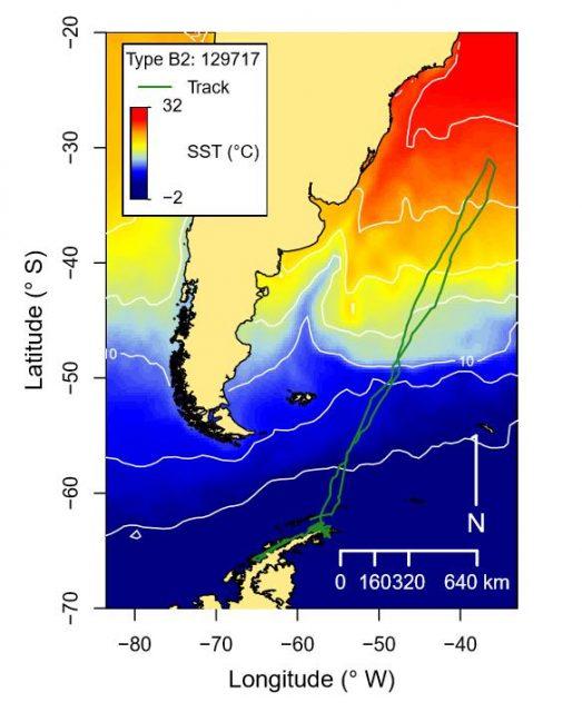 Wale schwimmen bis zu 11.000 Kilometer während einer Wanderung.