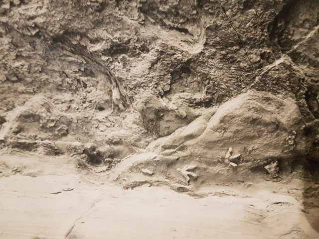 Fußabdrücke von Dinosaurier an einer Höhlendecke in Australien.