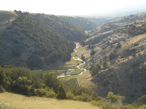 Getreide in Altai-Gebirge gefunden