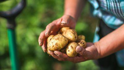 Bedarf ist gedeckt, doch Ökolandbau fordert mehr Geld von der EU