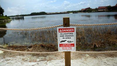 Schlangen-Alarm in Park in Florida