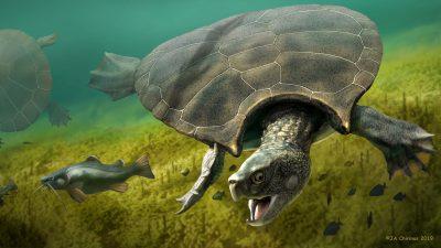 Stupendemys geographicus: Die drei Meter lange Schildkröte mit Stachelpanzer