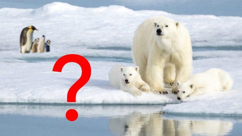 Die Polarregionen bieten reichlich Platz für die Kinderstuben von Eisbären und Pinguinen.