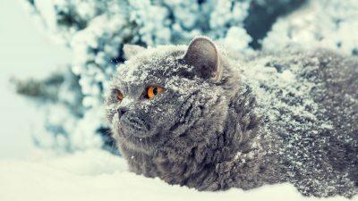 Katze Dymka mit erfrorenen Pfoten bekommt vier neue aus Titan