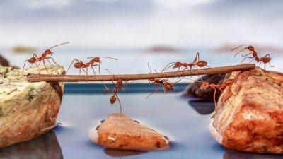 Die Ameisen – Von Joachim Ringelnatz