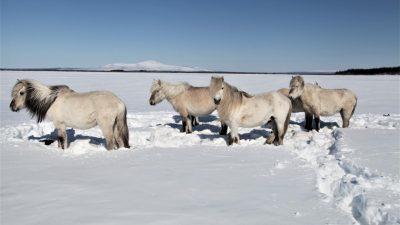 Tauender Permafrost: Riesige Löcher, abrutschende Hänge und Wohnhäuser