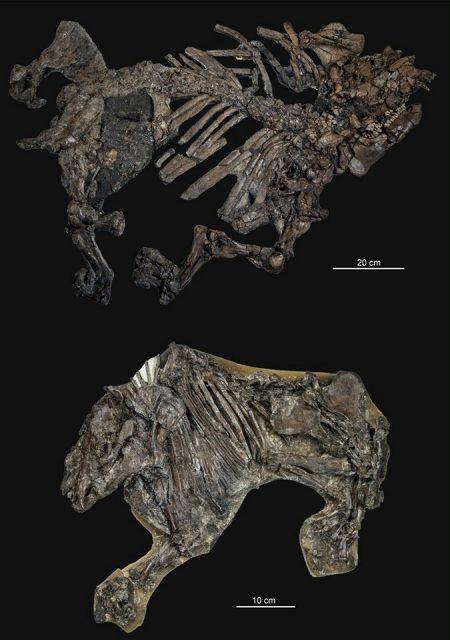 Fossilien aus Geiseltal
