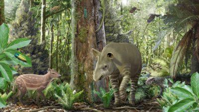 Pferd, Tapir und Co.: Fossilien aus Geiseltal geben neue Einblicke in die Evolution