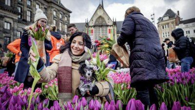 Niederländer hamstern Tulpen statt Klopapier – Händler vernichten täglich Millionen Blumen